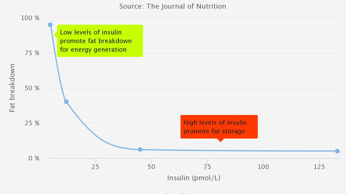 Fat breakdown as a function of insulin levels